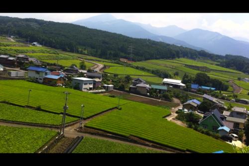 富士山の麓、しきみ栽培の日常