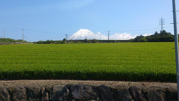 富士山が世界遺産に。新茶の季節です。